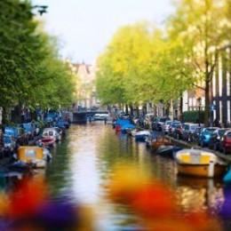 Амстердам - столица тюльпанов