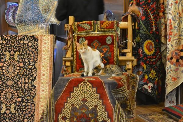 Istanbul_cat
