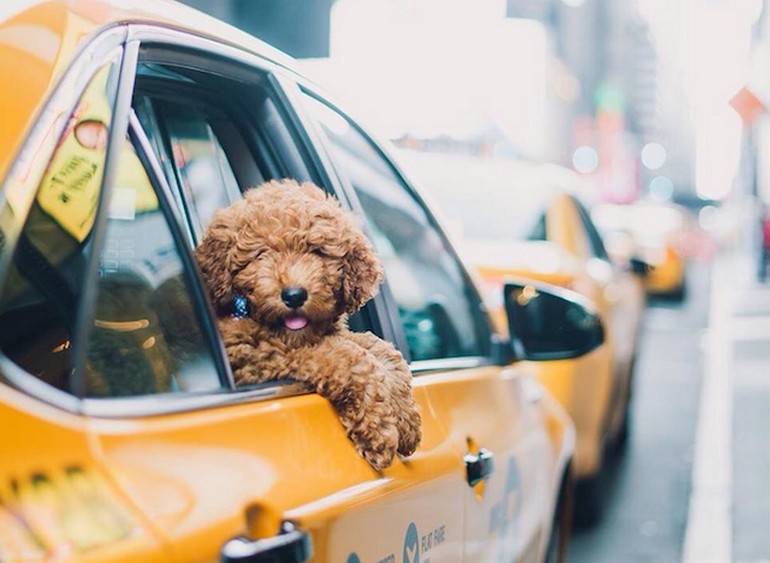 Не заказывайте такси